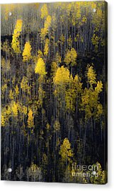 Acrylic Print featuring the photograph Far And Away by The Forests Edge Photography - Diane Sandoval