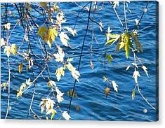 Farewell Autumn      Indiana Acrylic Print
