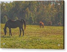 1012 - Fargo Road Horses I Acrylic Print