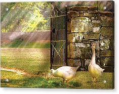 Farm - Geese -  Birds Of A Feather Acrylic Print by Mike Savad