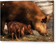 Farm - Pig - Family Bonds Acrylic Print by Mike Savad