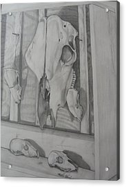 Farm Boxed Skeletons Acrylic Print by Matthew Handy