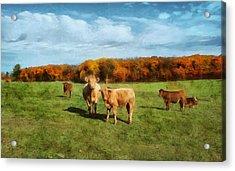 Farm Field And Brown Cows Acrylic Print