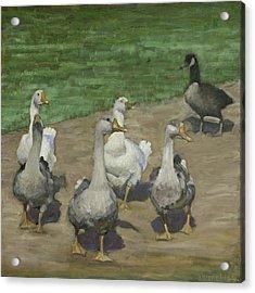 Farm Geese Acrylic Print by John Reynolds