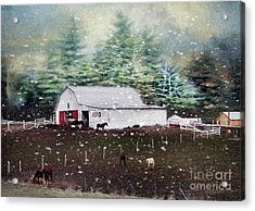 Acrylic Print featuring the photograph Farm Life by Darren Fisher