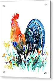 Acrylic Print featuring the painting Farm Rooster by Zaira Dzhaubaeva
