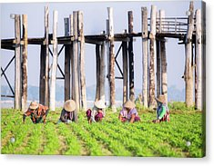 farmers at work around U-Bein Bridge Acrylic Print by Anek Suwannaphoom