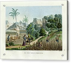 Acrylic Print featuring the drawing Farming On Guam Island by d apres Pellion