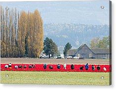 Farming Tulips L574 Acrylic Print by Yoshiki Nakamura