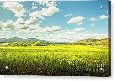 Farmland Colour Acrylic Print