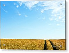 Farmland To The Horizon 1 Acrylic Print by Heiko Koehrer-Wagner