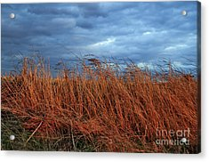 Farmland Winter Acrylic Print by Susan Yates