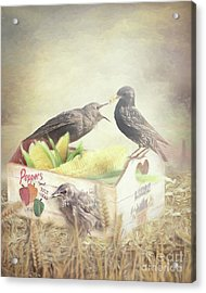 Farmstand Starlings Acrylic Print by Ulanawa Foote