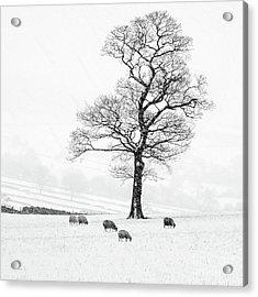 Farndale Winter Acrylic Print by Janet Burdon