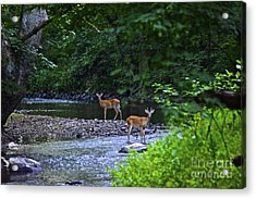 Fascinated Acrylic Print
