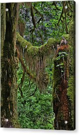 Fascinating Hoh Valley - Hoh Rain Forest Olympic National Park Onp Wa Usa Acrylic Print by Christine Till
