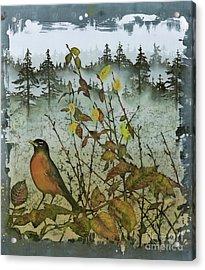 Fat Robins Outside My Windows Acrylic Print by Carolyn Doe