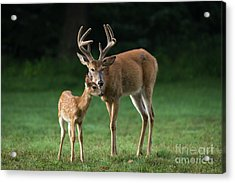 Acrylic Print featuring the photograph Fatherly Advice by Andrea Silies
