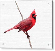 Father's Day Cardinal Acrylic Print