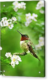 Fauna And Flora - Hummingbird With Flowers Acrylic Print
