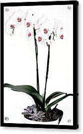 Favorite Gift Of Orchids Acrylic Print by Marsha Heiken