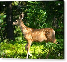 Fawn In Woods Acrylic Print