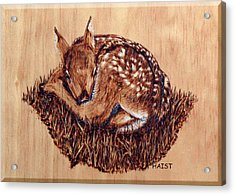 Acrylic Print featuring the pyrography Fawn by Ron Haist