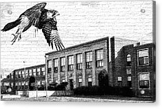 Fchs Falcons Acrylic Print