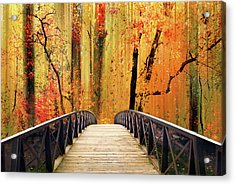 Acrylic Print featuring the photograph Forest Fantasia by Jessica Jenney