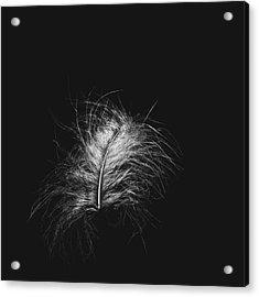 Feather 3 Acrylic Print