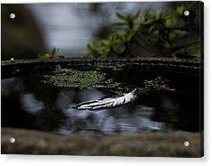 Floating On A Still Pond Acrylic Print by Marilyn Wilson
