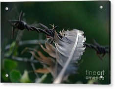 Feather And Barbed Wire Acrylic Print
