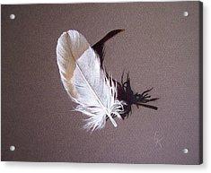 Feather And Shadow 1 Acrylic Print by Elena Kolotusha