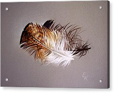 Feather And Shadow 2 Acrylic Print