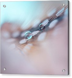 Feather And Water Droplets Acrylic Print by Jenny Rainbow