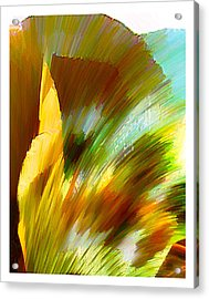 Feather Acrylic Print by Anil Nene