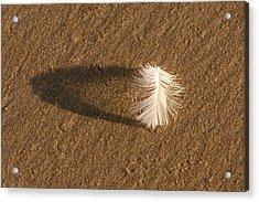 Feather Arch Acrylic Print