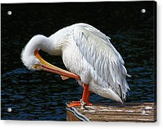Acrylic Print featuring the photograph Feather Check by HH Photography of Florida