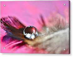 Feather Drop Acrylic Print by Diane Alexander