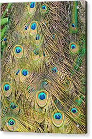 Acrylic Print featuring the photograph Feather Finesse by Margaret Bobb