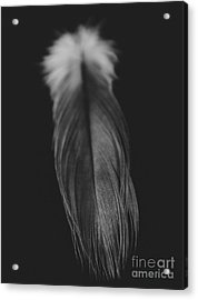 Feather In Black And White Acrylic Print