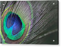 Feather In Green Acrylic Print