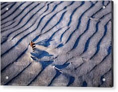 Acrylic Print featuring the photograph Feather In Sand by Michelle Calkins