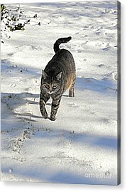 Feather In Snow Acrylic Print
