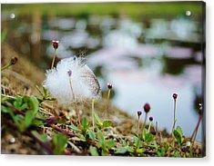 Feather Acrylic Print by Lynda Dawson-Youngclaus