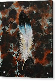 Feather Acrylic Print by Michael Creese