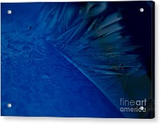 Feather Of Ice Acrylic Print by Sverre Andreas Fekjan