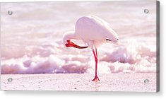 Feather Out Of Place Acrylic Print by Betsy Knapp