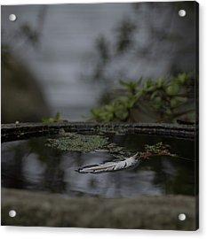 A Feeling Of Floating Weightlessly Acrylic Print