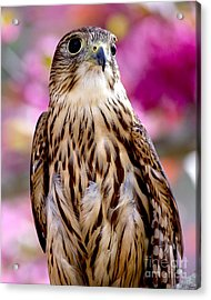 Feathered Wizard Acrylic Print